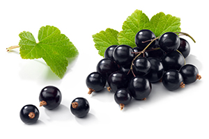 Beneficial Food - Black Currant Fruit Image
